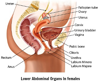 Female Abdominal Pain Top Ten Causes Of Abdominal Pain