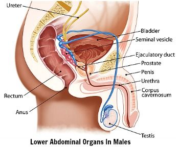 Lower Abdominal Pain Causes Diagnosis And Treatment
