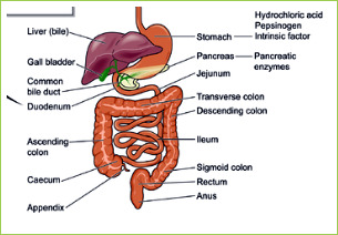 i cancer gallbladder symptoms