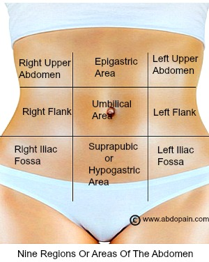 Areas of regions of the abdomen