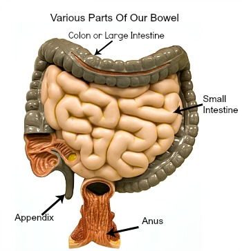 Epiploic Appendagitis Can Be Found On The Wall Of The Colon