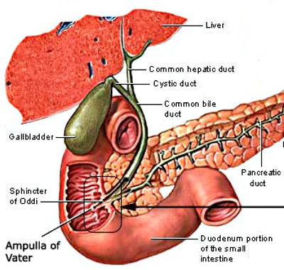 Sphincter of Oddi Dysfunction