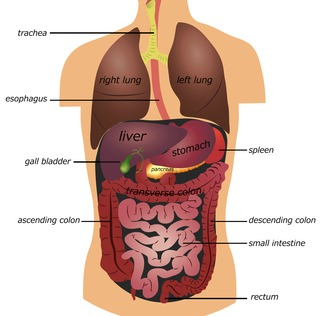 Spleen pain causes diagnosis and treatment of pain under left rib spleen pain ccuart Images