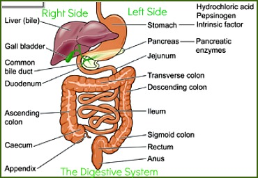 Causes Of Abdominal Pain Common Causes Of Pain In The