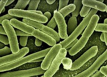 Bacteria overgrowth has been implicated as a possible contributing factor to ibs.