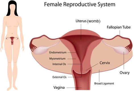 Female abdominal pain causes are mainly those related to the womb and other reproductive organs, plus those in men.