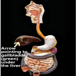 Gallbladder picture